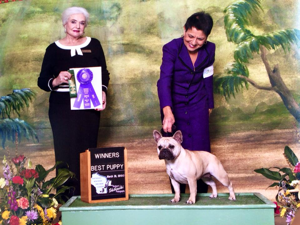 Show Photos © Hallmark French Bulldogs
